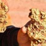 Avustralyalı altın avcıları 250 bin dolarlık altın buldu!