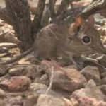 Fil faresi, 50 yıl sonra ortaya çıktı!