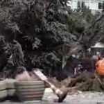İBB'nin Beylikdüzü'nde ağaç kıyımı kamerada