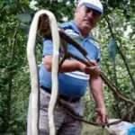 Fındık bahçesindeki 3 metrelik yılan korkuttu