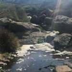 CHP'den yine çevre katliamı