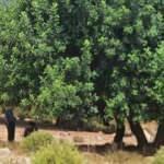 'Dağlık alana gidiyorum' dedi, ağaca asılı cansız bedeni bulundu