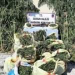 Samsun'da 81 kilo esrar ve 2 bin 600 kök kenevir ele geçirildi