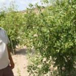 Bahçesinde yetiştirdi, gelirini Afrikalılara vakfetti