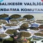Balıkesir'de jandarma 318 kilogram esrar yakaladı