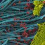 Koronavirüsün son görüntüsü yayımlandı