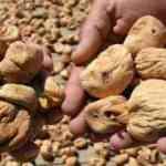 Kuru incirin alım fiyatı yüzde 30 arttı