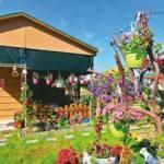 Hobi Bahçeleri düzenlemesi TBMM'ye geliyor! Metrekaresi için 10 TL ceza kesilecek
