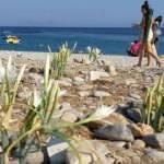 Kum zambaklarını koparmanın cezası 73 bin 747 TL
