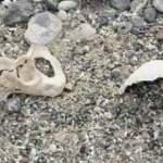 Arpaçay Barajı'nda su seviyesi düştü, tarihi mezarlık ortaya çıktı