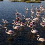 İzmir Körfezi'nin gerdanlığı: Gediz Deltası