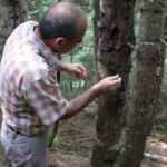 Ormanları avcı böcekler koruyacak!