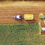 Kansere yol açan tarım ürününe Türkiye'de yasak getirildi