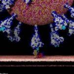 Koronavirüs insan hücrelerine böyle giriyor! İlk kez göreceğiniz görüntüler