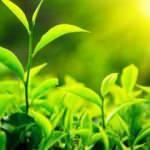 Yapay fotosentez teknolojisi iklim dostu üretime destek veriyor
