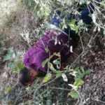 1 yıldır ormanlık alanlarda saklanan şüpheli yakalandı