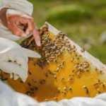 Korkutan gelişmenin sebebi belli oldu! Tehlikeli seviyeye ulaştı: milyonlarca arı öldü