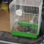 Nesli tükenmekte olan kuşu kediden kurtardı