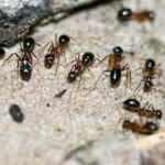 Rüyada karınca görmek ne demek? Rüyada karınca yediğini görmek yorumları...