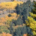 Sarıkamış Ormanları'nda renk cümbüşü