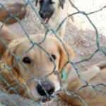 Hayvan hakları kanun teklifi Meclis'e geliyor: Sokağa atana 10 bin lira ceza