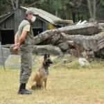 TSK için yetiştirilen köpekler, zorlu eğitim sürecinden geçiyor