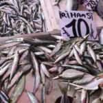 Hamsi fiyatı çakıldı! 40 liradan 10 liraya düştü