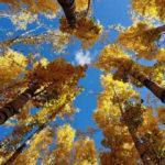 Gümüşhane ve Bayburt'ta güz renkleri görsel şölen sunuyor!