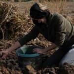 Türkiye'de sadece 2 kadın! Mor patates yetiştiriyorlar