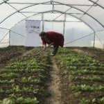 TİKA ile Bosnalı anneler tarımsal ekonomiye katkı sağlıyor
