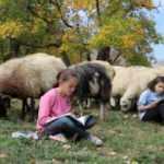 Hem koyun güdüyorlar hem de ders çalışıyorlar