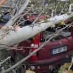 Kesilen ağaç, yoldan geçen otomobilin üzerine düştü