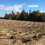 Kızılcahamam'da 35 bin fidan toprakla buluştu