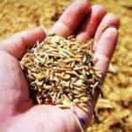 Ata tohumlarına sahip çıkan hibeye hak kazanacak