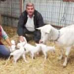 Beşiz doğuran keçi sahibini sevindirdi