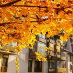 Bolu Termal Kasaba'dan kartpostallık hazan manzaraları