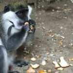 Düzce'de sahibinin terk ettiği tropikal bir maymun bulundu