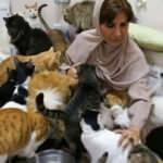 Evinde 480 kedi ve 12 köpeğe bakıyor!