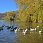 Gölbaşı Gölleri Tabiat Parkı doğaseverleri hayran bırakıyor
