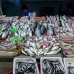 Karadeniz hamsisi en lezzetli döneminde