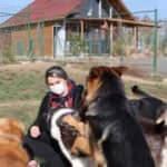 Köye yerleşerek, 'köpek oteli' kurdular