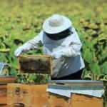 Arıcılık, ipek böcekçiliği, kaz ve hindi yetiştiriciliği yatırımlarına destek