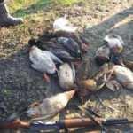Kuş cennetinde kaçak ördek avlayan coğrafya öğretmeni yakalandı