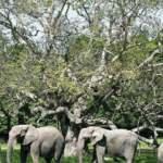 Kuraklık çeken Namibya'da 170 fil satışa çıkarıldı