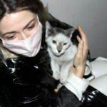Deprem sonrası kaybolan ve iki bina arasında sıkışan kedisine 42 gün sonra kavuştu
