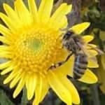 Giresun'da hava sıcaklığı arıları vurdu