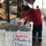 Hamsi balıkçıların kuru fasulyesi! Bolluk yaşanıyor
