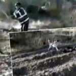 Kahramanmaraş'ta eşeğe işkence! İşte cezası