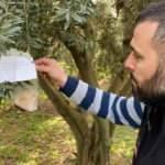 Zeytin ağacındaki not ve para şaşkına çevirdi