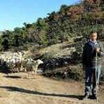 Koyunları telef olan aileyi Bakan Pakdemirli sevindirdi